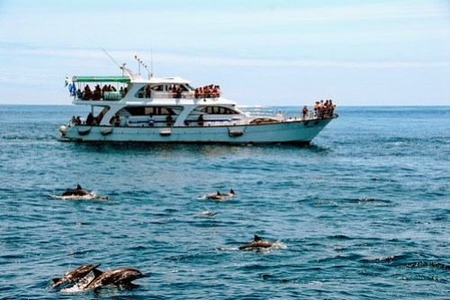 鯨夏假期之旅-賞鯨豚、登龜山島趣!