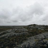 Flate Frøya