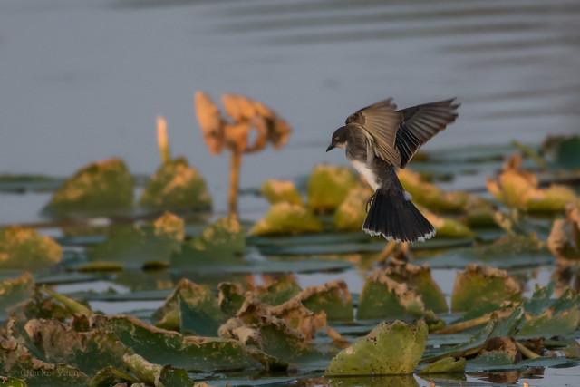 Oklahoma Bird Guide Checklist 470 Species  Flickr