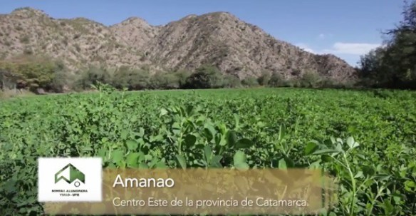 Proyecto Caprino en Amanao