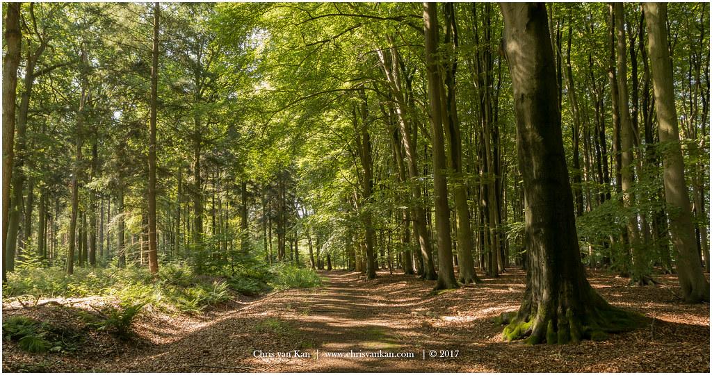 Summer Forest Netherlands  Chris van Kan  Flickr