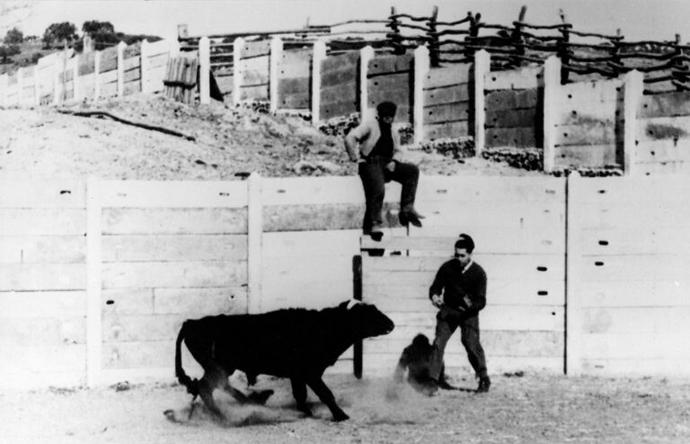 El Doctor Delgado inhibiendo la agresividad de un toro de lidia, 1963. | © Yale University Library.