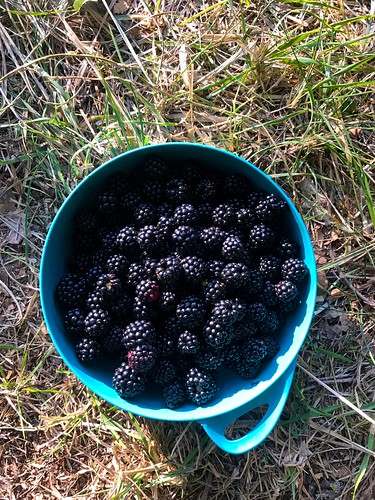 italy cycling trip - plastic plate filled with blackberries
