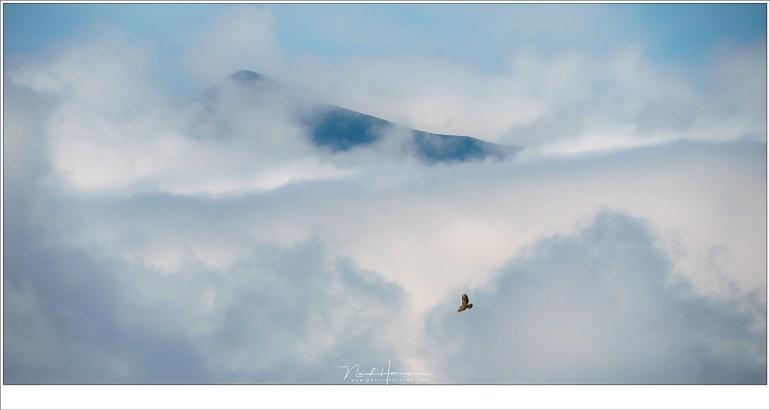 Geen arend maar een buizerd, hoog in de wolken boven het Brixenthale (Sony A9 + FE 100-400mm @ 400mm | ISO100 | f/13 | 1/320)