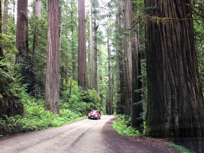 Jedediah Smith Redwoods State Park - California - Jurassic world - amazign forest - viajar