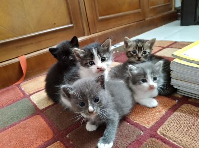 Vera's Kitties