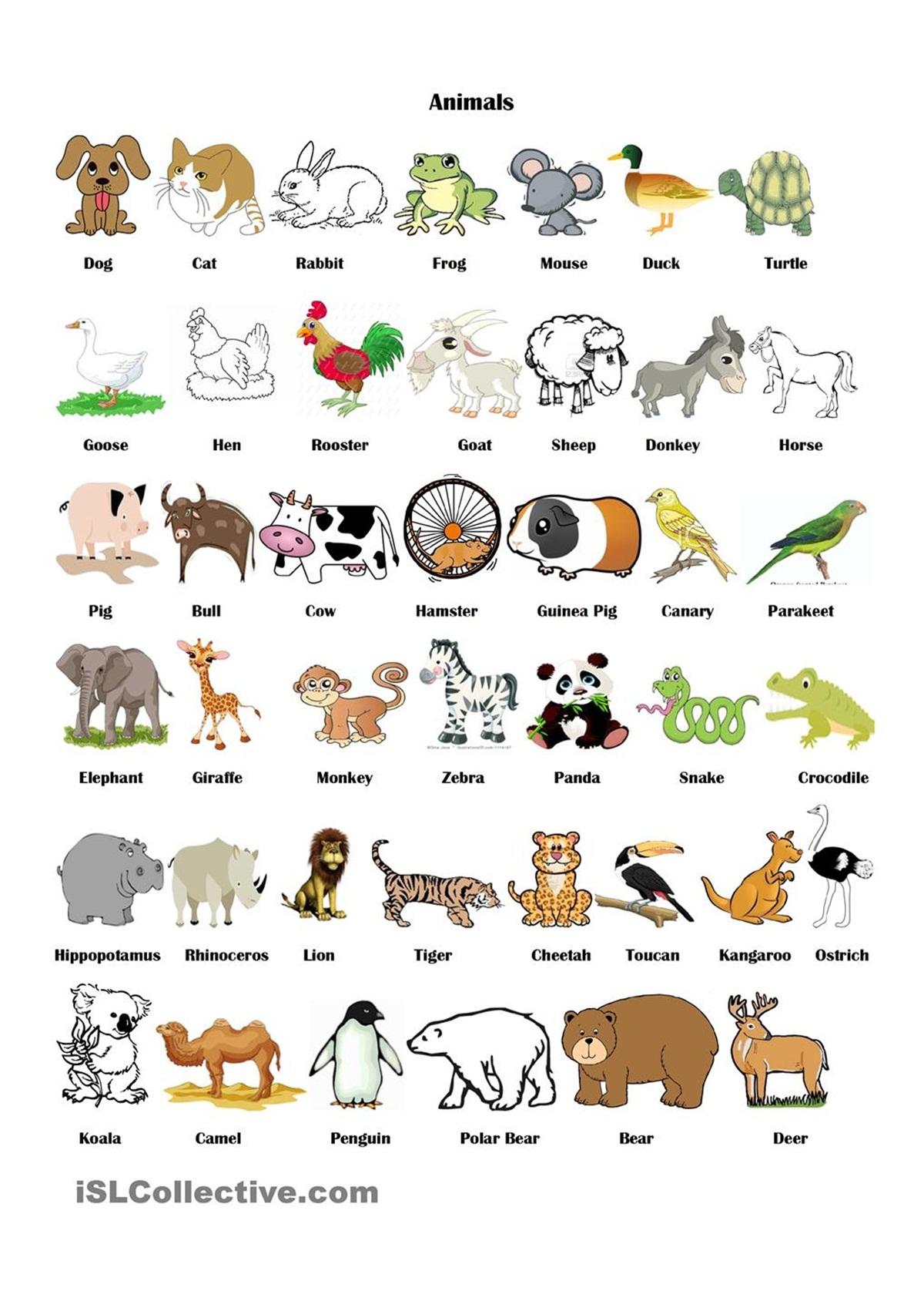 Vocabulary Animals