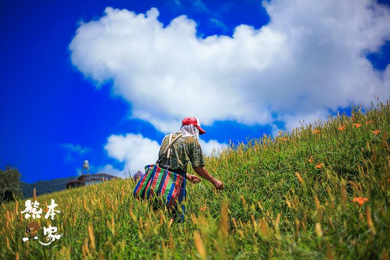 臺灣小瑞士 六十石山金針花季 花蓮富里賞花~俯覽花東縱谷景點   熊本一家の愛旅遊瘋攝影