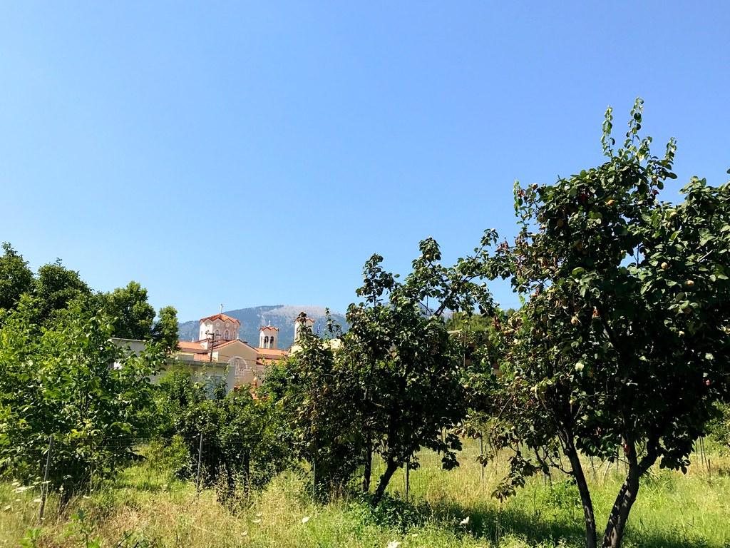 tree crops in prokopi village on euboea