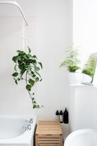 Shower Plants: 5 Plants That Thrive In Your Bathroom - A ...
