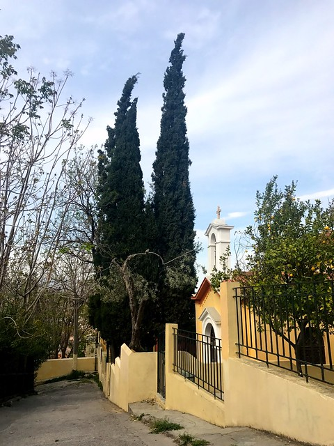 lemon tree, olive tree, and two tall cypresses in churchyard in central athens