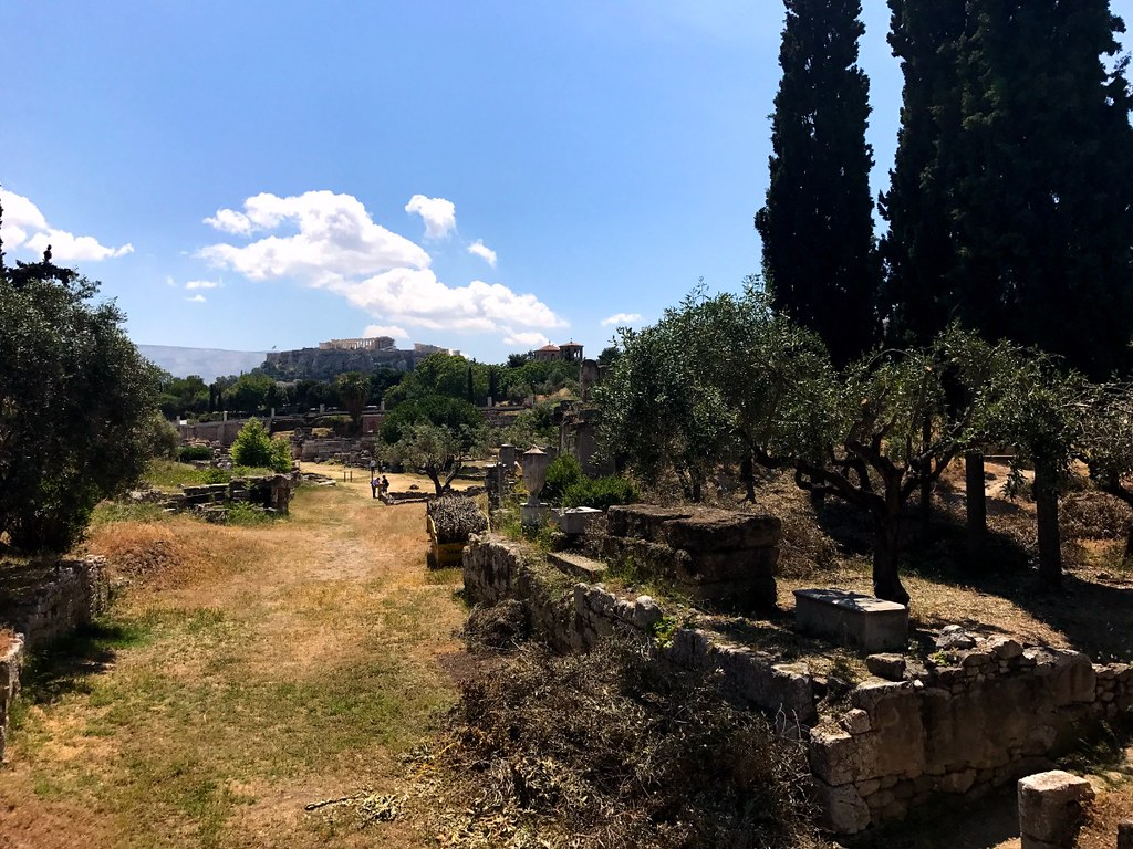 olive trees, cypresses and view of acropolis in athens