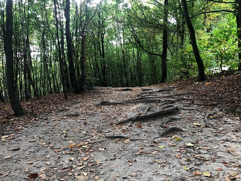 forest trail near bastei bridge in saxon switzerland