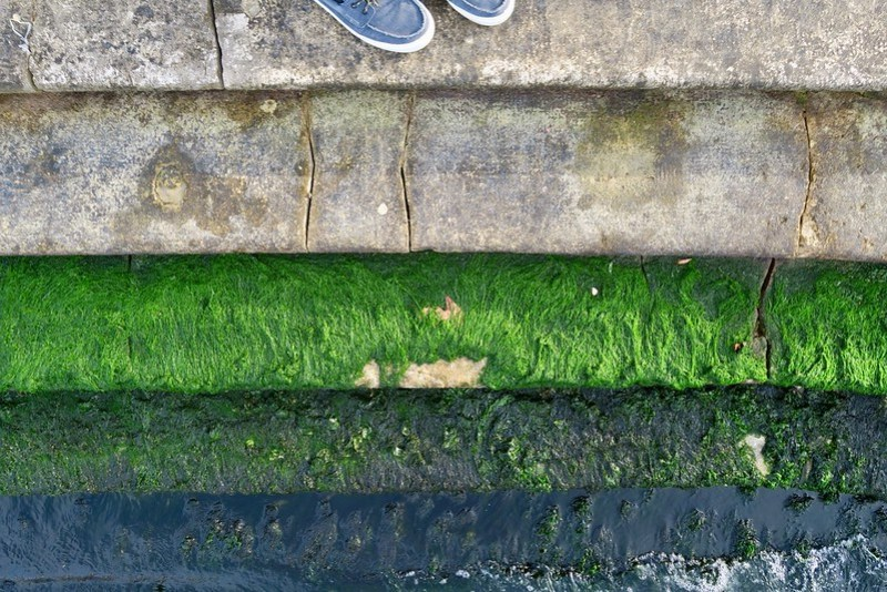 Algae Green Steps w Shoes