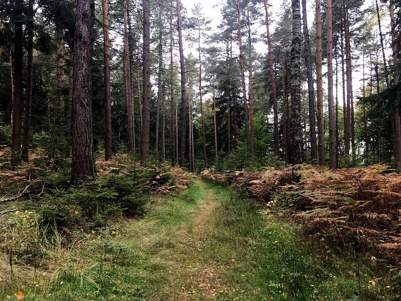 trail to kleiner zschirnstein in saxon switzerland