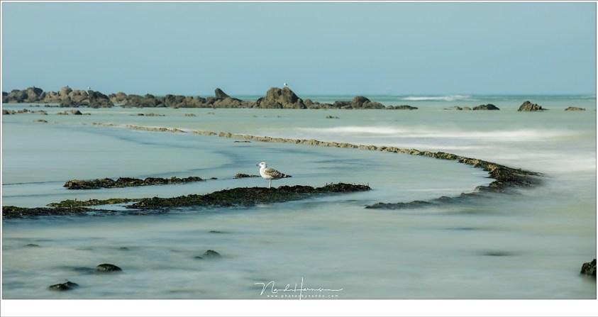 Een meeuw die rustig wacht op het afgaande tij. Langzaam komen de patronen op het strand van Cap Blanc Nez boven water uit. (EF70-200L II @ 168mm | ISO200 | f/8 | 3sec | Lee Big Stopper)