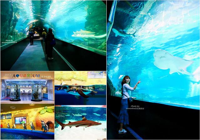 【首爾 COEX AQUARIUM水族館】韓國最大的鯊魚棲息地,還有海底隧道,海洋餵食秀,水中芭蕾舞表演,根本太精彩 ...