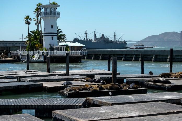 Leones marinos en el Pier 39, puerto de San Francisco, descansando al sol