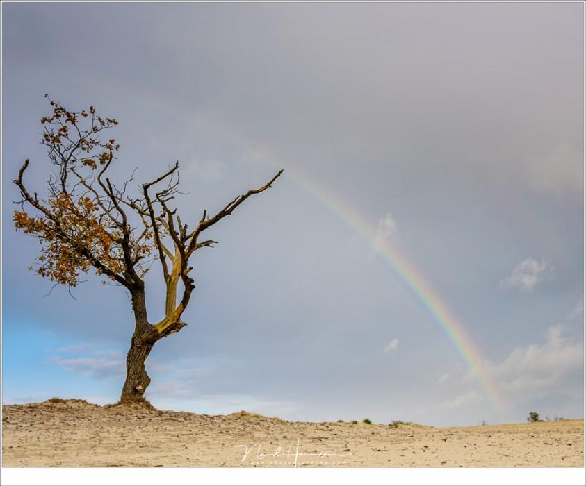 Maak indien mogelijk de regenboog onderdeel van je compositie dan alleen maar de regenboog fotograferen. Het geeft iets extra's aan je foto (Nikon D810 + 35mm | ISO64 | f/11 | 1/60)
