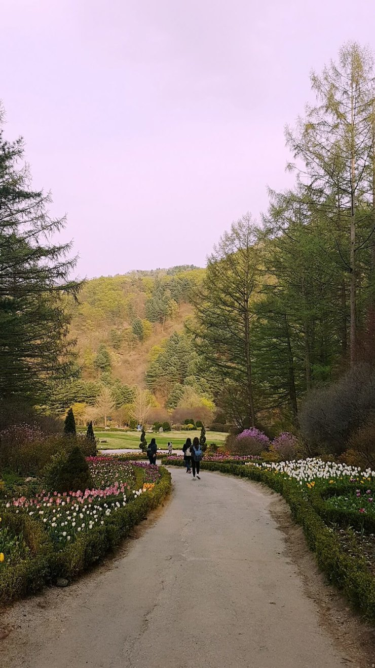 view in garden of morning calm