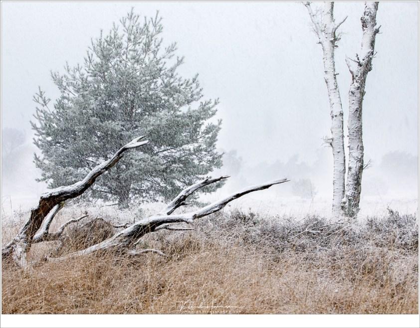 Goudgeel en groen worden langzaam wit in dit winter wonder land