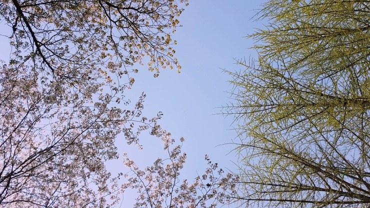 spring in nami island
