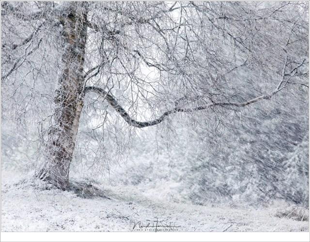 Nog een berk in de sneeuw (200mm | ISO800 | f/8 | 1/80)