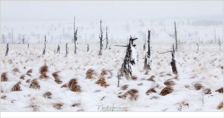 Overal zijn de restanten van bomen te zien. Wie weet veranderen deze stronken uiteindelijk in het kienhout.