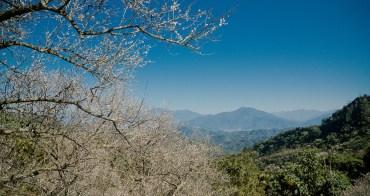 國姓鄉旅遊︱山城市的梅林祕境、九尖梅莊.近賞梅景、遠眺雪景的白色視界