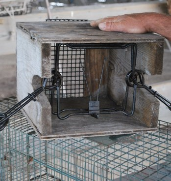 Photo of a trap