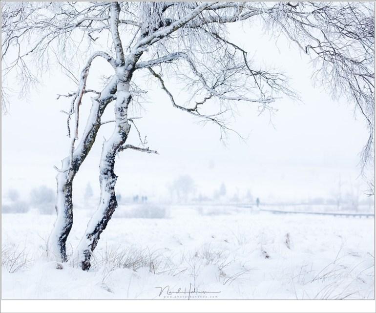 De ijzige sneeuw op de stammen en takken verraad de richting van de wind. In de verte trotseren wandelaars de koude wind