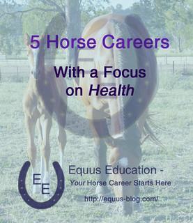 5 Horse Careers with a Focus on Health | Equus Education
