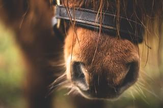 Be Ready to Improve Your Horse Books   ChristineMeunierAuthor.com