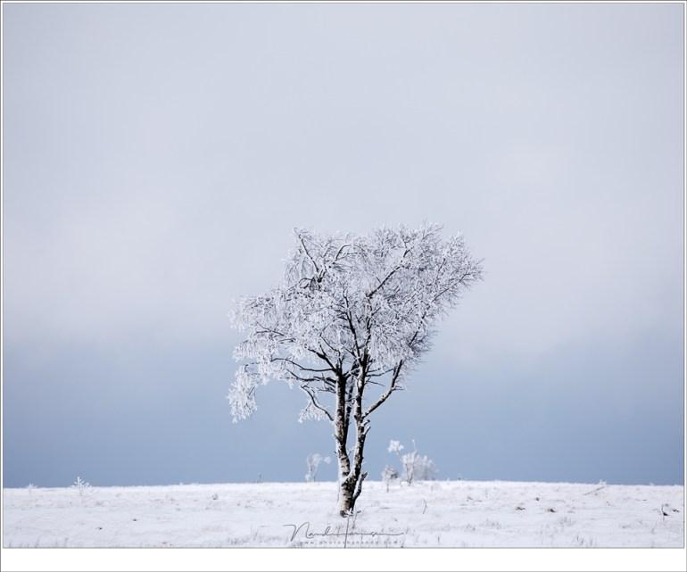 Een eenzame berk in een landschap van sneeuw