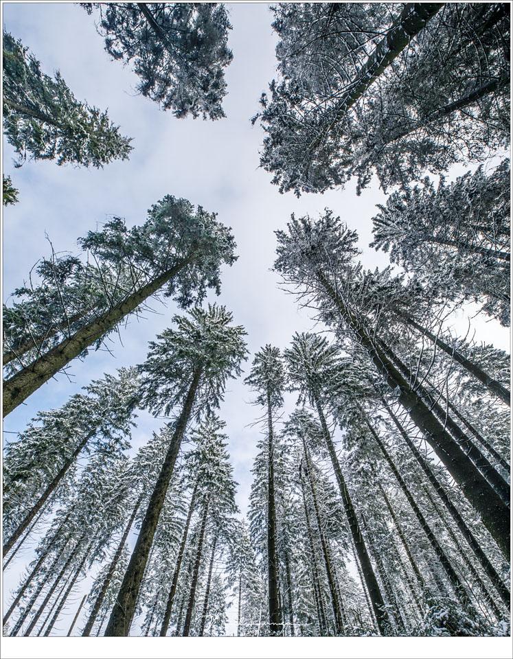 De hoge naaldbomen die boven ons hoofd naar een radiant buigen. (16mm - ISO100 - f/16 - 1/60 sec)