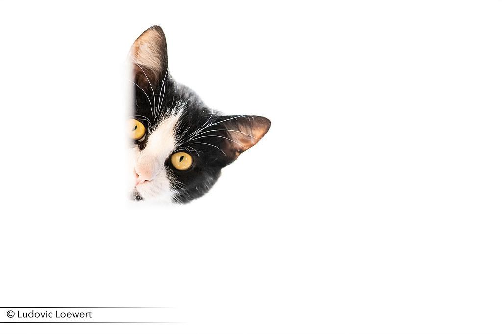 Pixelistes • Nikkor AF-S 300mm f/2.8G ED VR II [Topic