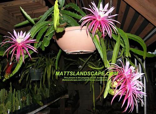 Hanging Flower Pots Indoors