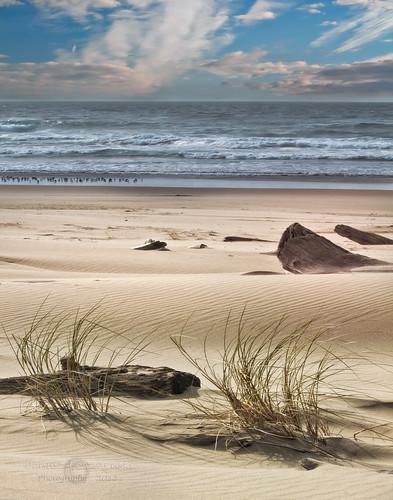 Meditation  sand dunes on the Oregon Coast  Beautiful