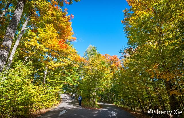 Huntsville Lions Lookout Fall Colors