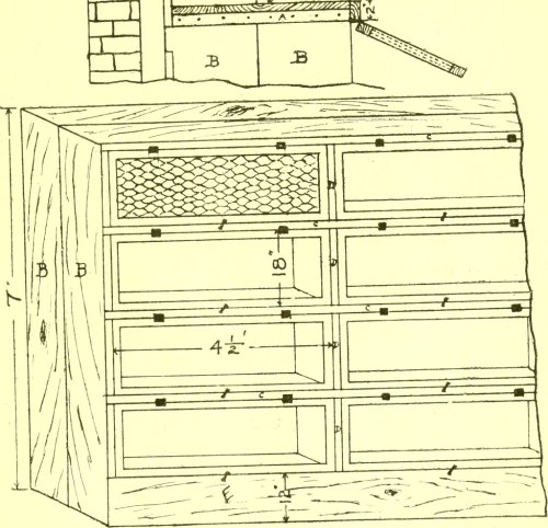 small resolution of  image from page 30 of cavy culture a book of practical instructions on the