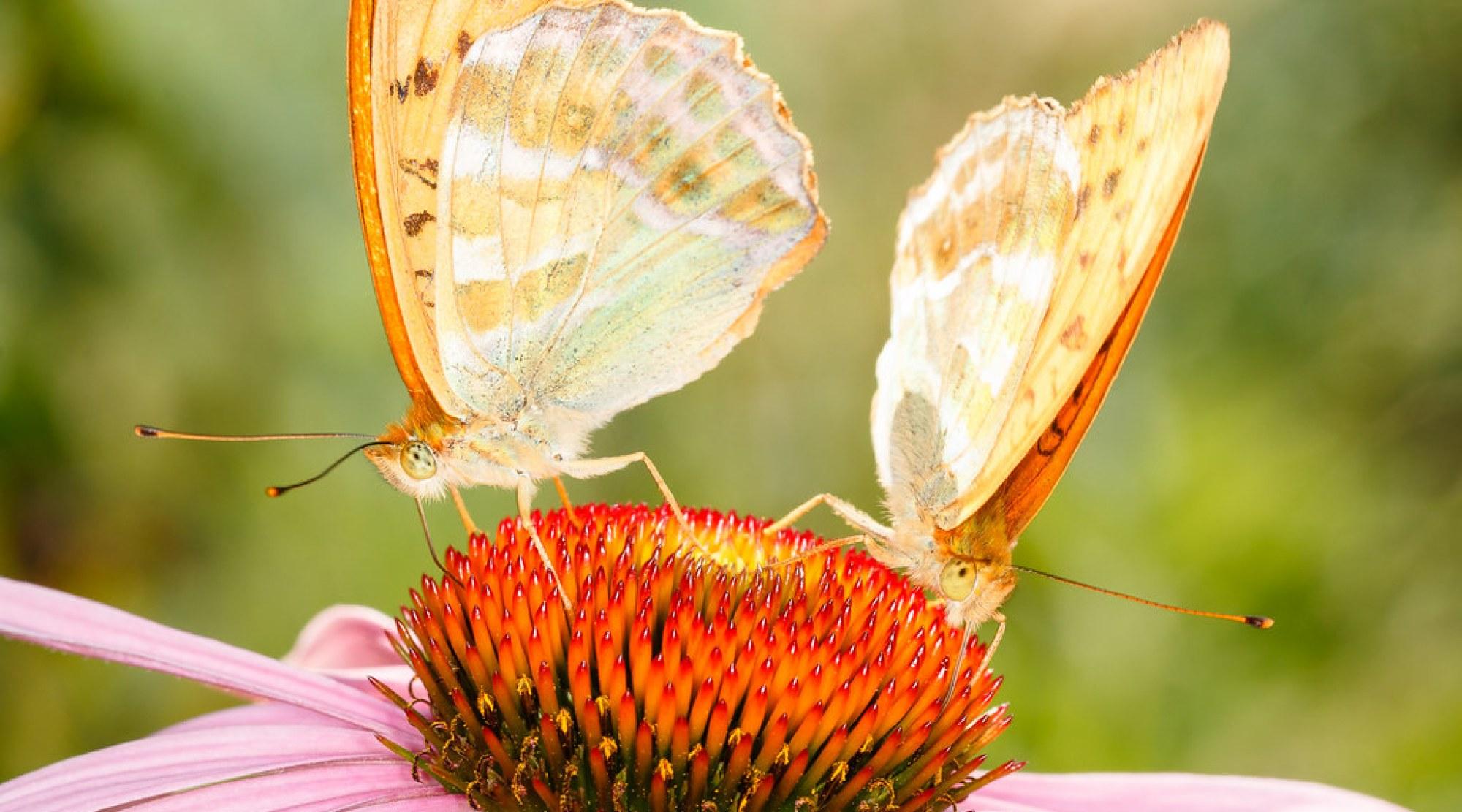 Schmetterlinge 100