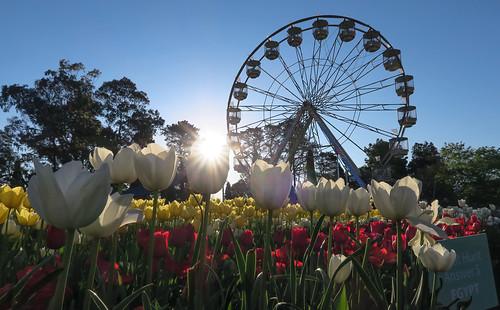 Floriade 1 Major flower festival held annually in