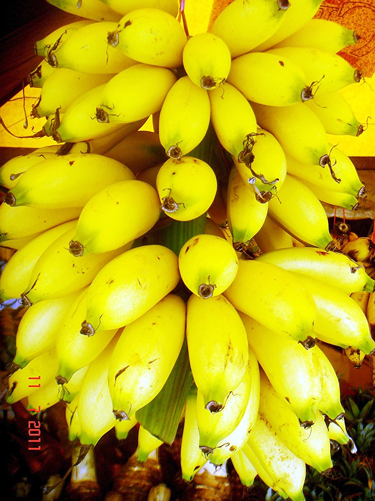 Musa Acuminata Colla AA Group 'Inarnibal' Kampung