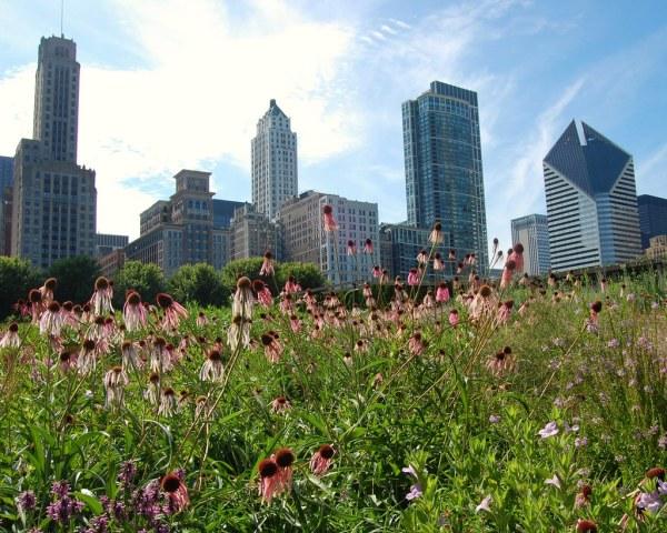 Lurie Garden In Chicago' Millennium Park