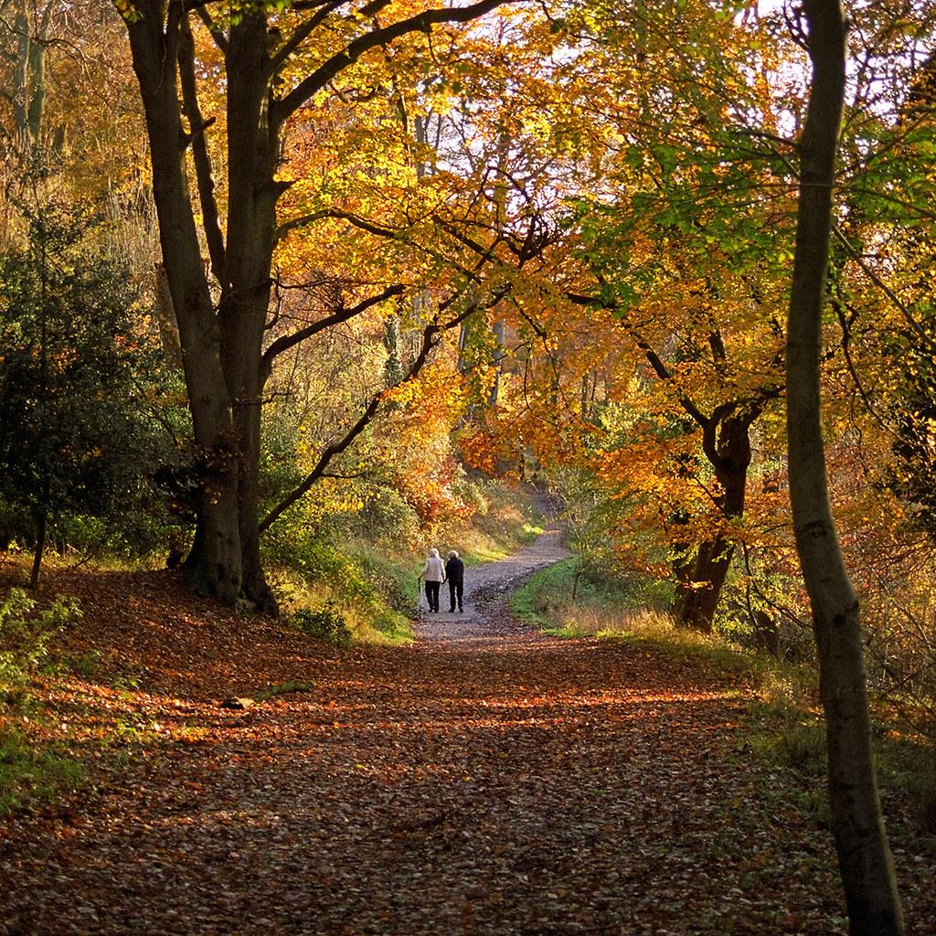 Autumn Falling Leaves Wallpaper Colors Of Autumn 10 Of 18 Ashridge Park Hertfordshire