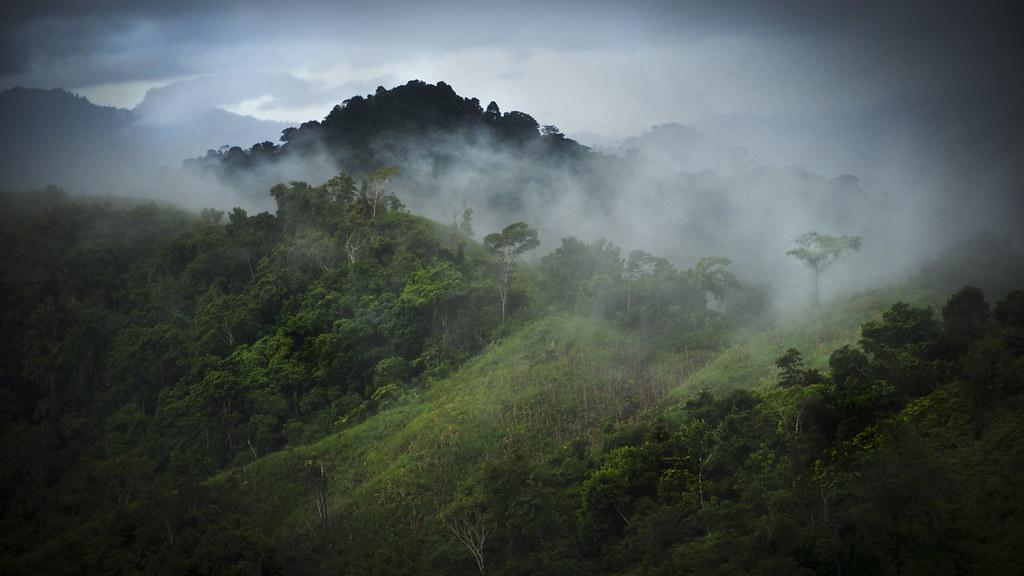 Forest Wallpaper Hd Cloudy Hills Ciudad Perdida Trek Colombia Simon Nazer