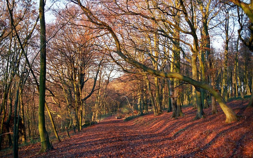 3d Wallpaper With White Background Colors Of Autumn 6 Of 18 Ashridge Park Hertfordshire