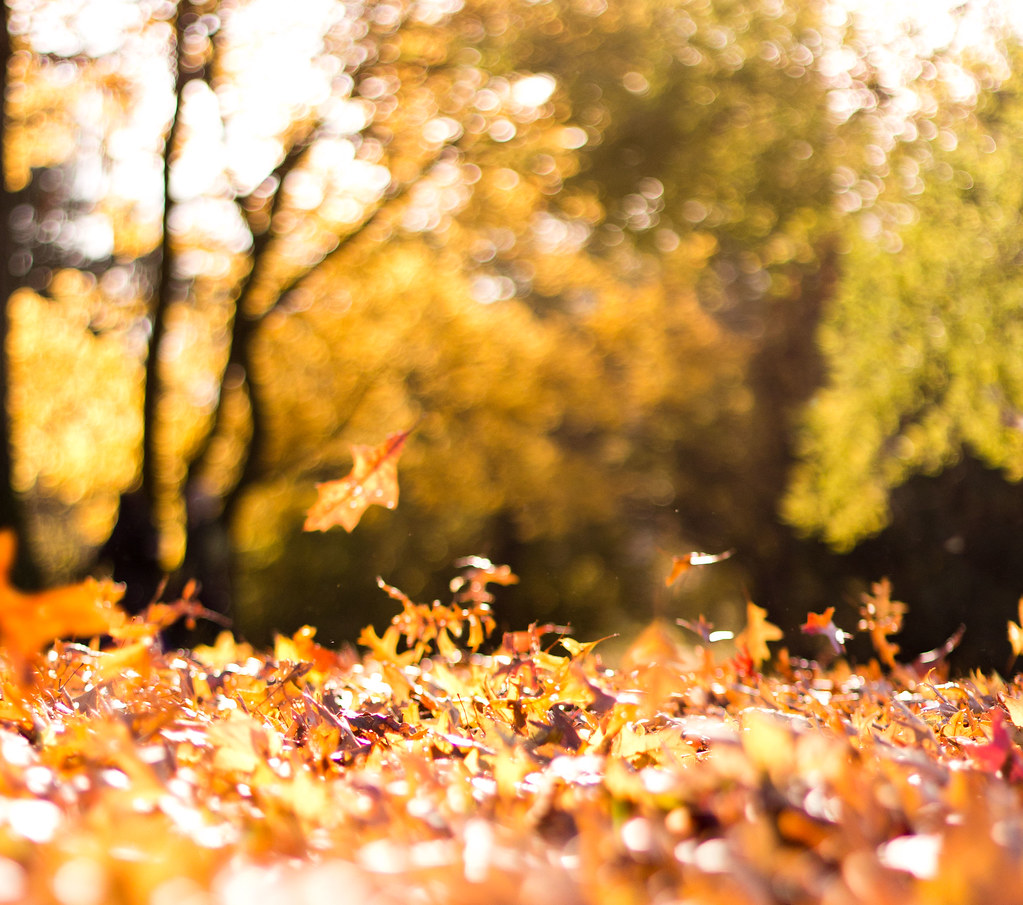Free Animated Falling Leaves Wallpaper Autumn Leaves Blowing In The Wind Sarah Flickr