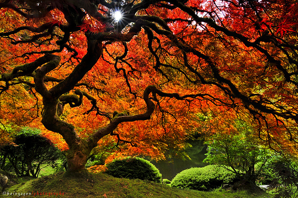 Pretty Wallpapers Fall Quot Little Giant Quot Autumn At Portland Japanese Garden I Ve