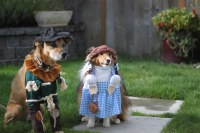 Wizard of Oz: Dog Edition | Dorothy and the Scarecrow ...